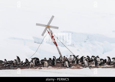 Gentoo penguin rookery at an Antarctic research statoin - Stock Photo