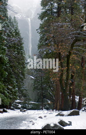 A snowy path leads through a winter wonderland to distant Yosemite Falls in Yosemite National Park. - Stock Photo
