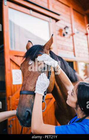 Veterinary horses on the farm conducting a review in one eye. - Stock Photo