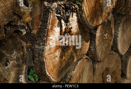 Tree trunks are in a pile , beautifull tree surface texture , shadows and light , high contrast , horizontal composition , - Stock Photo