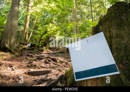 Blank sign next to a evergreen forest trail. - Stock Photo