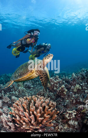 Two female divers (MR) on underwater scooters and a green sea turtle, Chelonia mydas, Hawaii. - Stock Photo