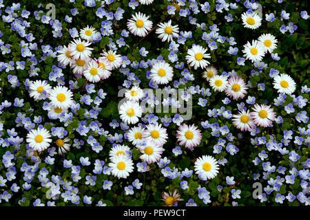 Spring Flowers in residential area, Basel, Switzerland.