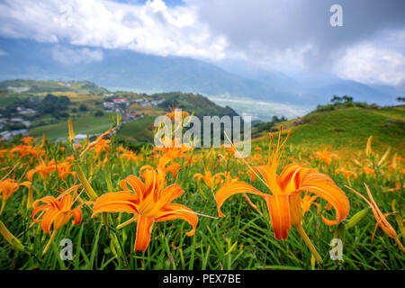 Orange daylily flower(Tawny daylily) bloom over the whole Sixty Rock Mountain(Liushidan mountain) with the background of bright blue sky and white clo - Stock Photo