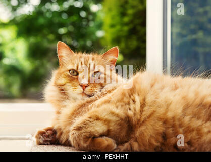 Close-up of a ginger cat lying on the floor by the patio door against green garden background. - Stock Photo