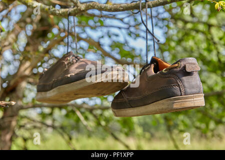 Old brown leather sneakers hang on laces on a tree branch in the countryside. - Stock Photo