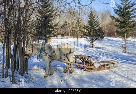 Horse cart running on snow road at winter in Harbin, China. - Stock Photo