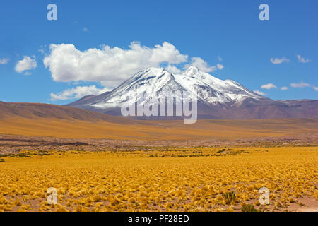 Panoramic landscape with a snow peak of volcanic mountains and yellow grass fields of the high altitude desert. - Stock Photo