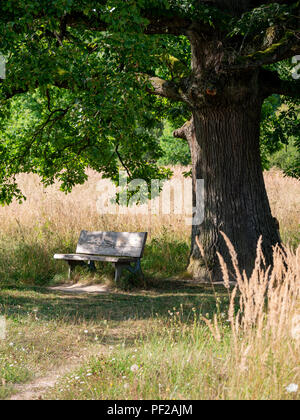 Wood bench in the shadow of a big tree with green leaves in the summer on the countryside - Stock Photo