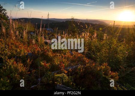 Sonnenaufgang an der Hornisgrinde - Stock Photo