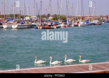 Boats moored and mute swans (Cygnus olor) swimming on the River Arun estuary in Littlehampton, West Sussex, south coast England on a sunny spring day - Stock Photo