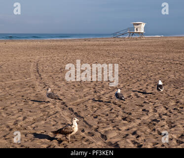 Four seagulls on a beach in southern California, USA with a lifeguard shack in the background on a sunny day in summer - Stock Photo