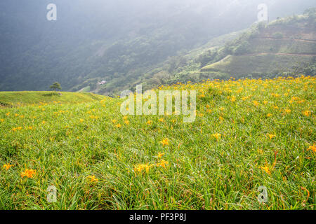 The Orange daylily(Tawny daylily) flower farm at Taimali Mountain with blue sky and cloud, Taitung, Taiwan - Stock Photo