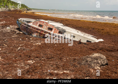 Stranded boat surrounded by Sargassum seaweed at Playa Santa Fe in Tulum, Mexico. - Stock Photo