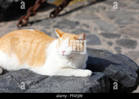 Cute cat with closed eyes take a nap lazy on Lanzarote black stones - Stock Photo