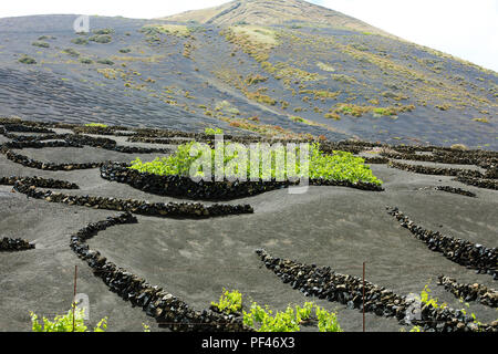 Volcanic black ground with vineyards in La Geria, Lanzarote, Canary Islands - Stock Photo