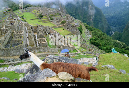 Stunning View of the Famous Machu Picchu with a Llama in Foreground, Cusco Region, of Peru - Stock Photo