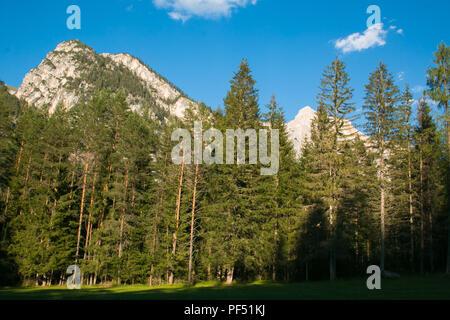 Wild forest near San Vigilio di Marebbe, Italian Dolomites - Stock Photo