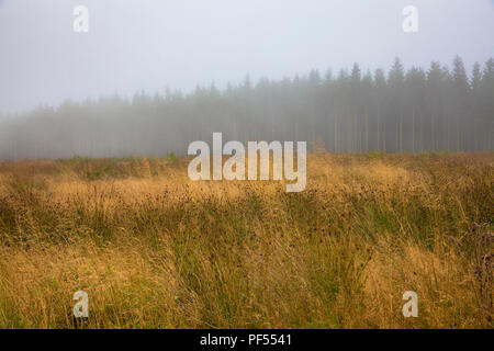 on the plateau of the high-moor High Fens in the east of Belgium.  auf dem Plateau des Hochmoors Hohes Venn, Belgien. - Stock Photo