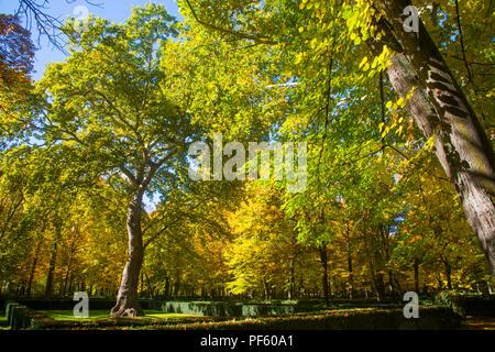La Isla gardens in Autumn. Aranjuez, Madrid province, Spain. - Stock Photo