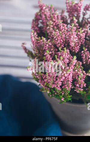Heather flowers in gray flowerpot. Space for text. Rustic style. Flowers in their bloom. - Stock Photo