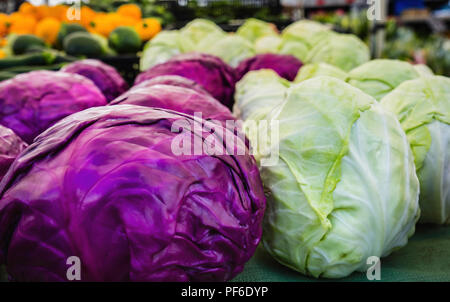 Cabbage from a low angle - Stock Photo