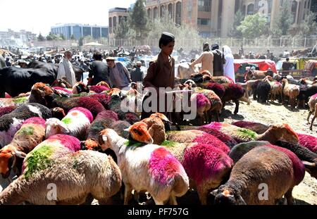 Kabul, Afghanistan. 20th Aug, 2018. Local people buy sacrificial animals in a livestock market in Kabul, Afghanistan, on Aug. 20, 2018, ahead of the annual festival Eid al-Adha. Credit: Dai He/Xinhua/Alamy Live News - Stock Photo