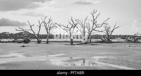 Ecology: global warming - rising sea levels - beach erosion - and hurricane damage are killing the trees of Botany Bay on Edisto Island South Carolina