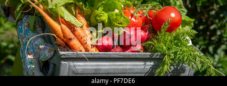 Unrecognizable female farmer holding crate full of freshly harvested vegetables in her garden. Homegrown bio produce concept. Sustainable living banne - Stock Photo
