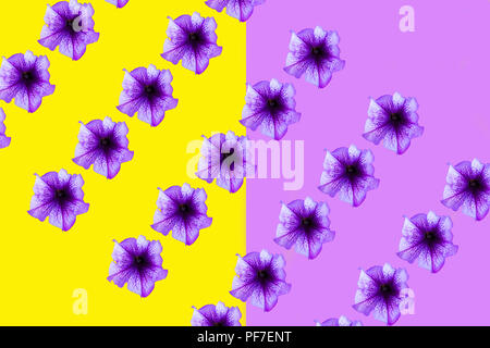Violet flowers on a yellow-violet background - Stock Photo