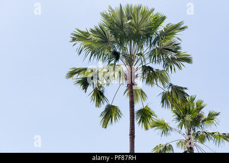 Palm trees in the blue sunny sky in background - Stock Photo