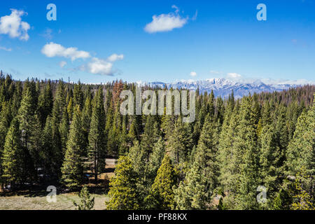 Green pine trees and tall mountains covered in snow for spring time in the Sierra Nevadas of California. - Stock Photo