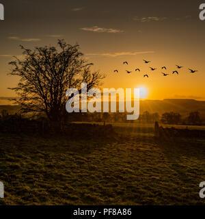 Birds on the move over Stanton in Peak, Derbyshire... - Stock Photo