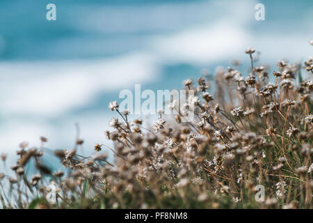 Clifftop at Bedruthan Steps on the north Cornwall coast in England, United Kingdom. - Stock Photo