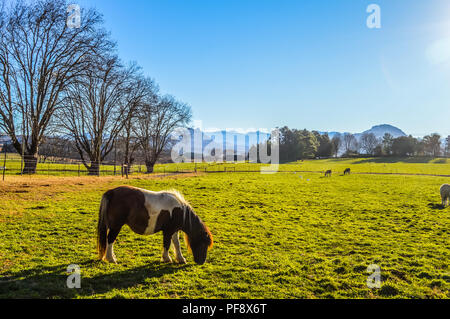 A complete green landscape of Underberg countryside with snow clad drakensberg in the background and a horse/pony grazing - Stock Photo