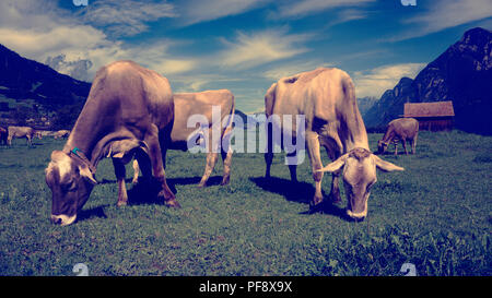 Europa Schweiz Sarganser Land Wangs Gonzen - Kühe grasen morgens auf der Weide an einem schönen Sommertag in der Schweiz - Stock Photo