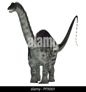 Apatosaurus Dinosaur - Apatosaurus was a herbivorous sauropod dinosaur that lived in North America during the Jurassic Period. - Stock Photo