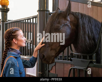 Visitor stroking a Friesian horse in the Royal Stables, The Hague, South Holland, The Netherlands, open to the public on August 17, 2018.. - Stock Photo