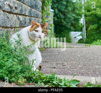 Old serious multi color cat looking curiously into the camera close-up funny outdoor portrait - Stock Photo