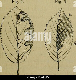 . Deutsche Forstbotanik, oder, Forstlichbotanische Beschreibung aller deutschen Waldhölzer. Woody plants; Wood. Fi?. 1. Fis 3. Fig. 4.. Please note that these images are extracted from scanned page images that may have been digitally enhanced for readability - coloration and appearance of these illustrations may not perfectly resemble the original work.. Nördlinger, Hermann von, 1818-1897. Stuttgart, J. G. Cotta - Stock Photo