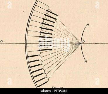 . Dictionnaire de physiologie. Physiology. DIOPTRIQUE OCULAIRE. 1^25 Pour avoir examiné [leurs yeux à l'aide d'une ou de deux lumières, comme il est dit plus haut, ExNER cite comme arthropodes à images par superposition les suivants, en fait de Coléoptères, Lampyris, Telephorns, Cantharis, HydropJdlm piceus, Cetonia; puis les papillons nocturnes. Probablement beaucoup de crustacés ont des images par superposition. Mais Exner n'a pas réussi à le démontrer par l'expérience, parce que les cônes n'y adhèrent pas à la cornée, circonstance qui rend cette expérience difficile (mais non im - Stock Photo