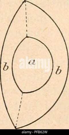 . Dictionnaire de physiologie. Physiology. DIOPTRIQUE OCULAIRE. 89 Généralement on prend dans les calculs;!,33 comme valeur de l'indice commun à ces trois milieux, bien qu'en réalité il soit un peu plus élevé. La différence entre l'indice de réfraction de l'humeur aqueuse et celui de la cornée est telle que, si à l'exemple de Tscherning, on supprime la réflexion à la surface cornéenue antérieure moyennant un baquet à faces planes rempli d'eau et appliqué contre l'Åil, on voitl'iuiage catoptrique de la face cornéenne postérieure plus éclatante même que celles du cristallin. A l - Stock Photo