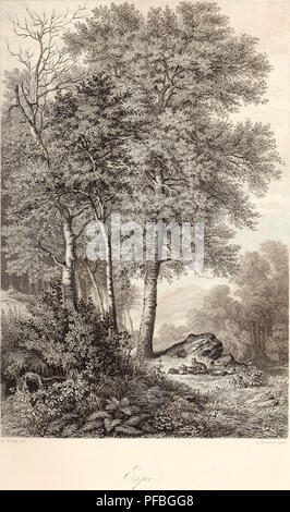 . Der wald. Forests and forestry; Trees. . Please note that these images are extracted from scanned page images that may have been digitally enhanced for readability - coloration and appearance of these illustrations may not perfectly resemble the original work.. Rossma?ssler, E. A. (Emil Adolf), 1806-1867. Leipzig und Heidelberg, C. F. Winter - Stock Photo