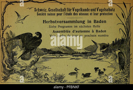 . Der Ornithologische Beobachter. Ornithology; Birds. . Please note that these images are extracted from scanned page images that may have been digitally enhanced for readability - coloration and appearance of these illustrations may not perfectly resemble the original work.. Ala, société suisse pour l'étude des oiseaux et leur protection. [Bern? : Ala, Schweizerische Gesellschaft für Vogelkunde und Vogelschutz] - Stock Photo