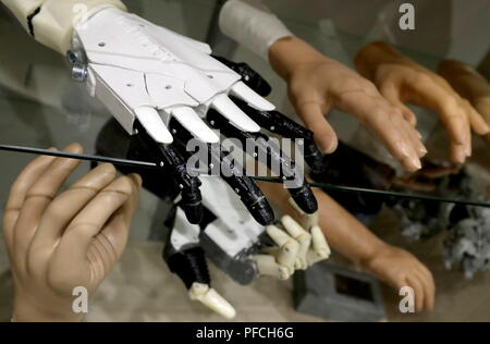 Veliky Novgorod, Russia. 21st Aug, 2018. VELIKY NOVGOROD, RUSSIA - AUGUST 21, 2018: Bionic prosthetic hands on display in a workroom at Veliky Novgorod's Tekhbionik scientific research company led by engineer Stanislav Muravyov (not pictured), the developer of a modular bionic prosthetic hand for Maria Gaidukova, 9, born with a congenital hand malformation; unparalleled in Russia, the prosthesis features three different grip patterns controlled by electrical impulses in an operator's muscles. Alexander Demianchuk/TASS Credit: ITAR-TASS News Agency/Alamy Live News - Stock Photo