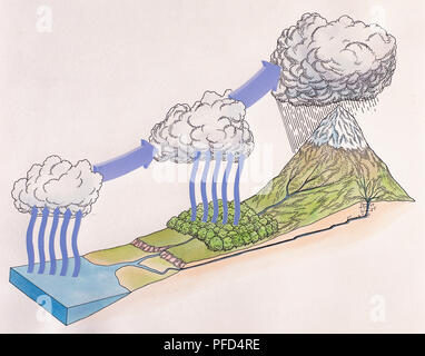 Diagram showing water cycle of rain and snow; evaporating sea water forming cloud, trees releasing vapour into clou, water droplets fall from cloud over cooler high ground, rainwater joins rivers and streams and flows back down to sea. - Stock Photo