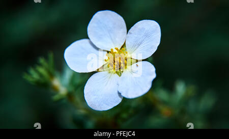 Beautiful artistic macro flowers with blurred background - Stock Photo