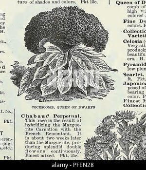 . Descriptive catalogue of vegetable, flower, and farm seeds. Nurseries (Horticulture); Nursery stock; Seeds; Bulbs (Plants); Gardening; Equipment and supplies; Bedding plants; Weeber & Don. SINGLE CHRYSANTHEMUM CATANANCHE Coerulea. Everlasting Flowers, blue. 2 ft. H. P. Pkt. 5c. CATCHFLY (Silene Armeria). A showy free-flowering hardy- annual. The gummy secre- tion on the leaves will entrap small flies. Mixed. 1% ft. Pkt. 5c. CEDRONELLA Cana, Fragrant, purple. H. P. 2 ft. Pkt. 5c. CENTAUREA (Dusty Miller) Beautiful silvery-foliaged bed- ding plants, extensively used for bordering. H. H. P. - Stock Photo