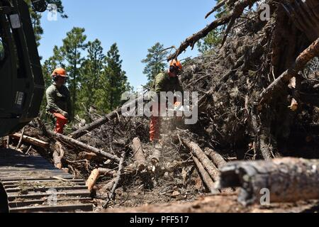 Soldiers from the 137th Transportation Company, Kansas Army National Guard and a soldier from Task Force 38, Canadian Army, cut timber to length to be hauled to Pine Ridge and Rosebud Reservations during the Golden Coyote training exercise's annual timber haul mission near Custer, S.D., June 12, 2018. This humanitarian mission fosters positive relations between the National Guard and Native American communities. - Stock Photo
