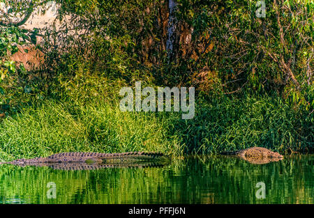 Australia Nothern Territory Darwin  Kakadu National Park - Crocodile - Stock Photo